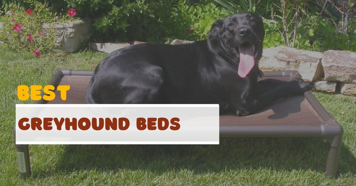 Best Greyhound Beds