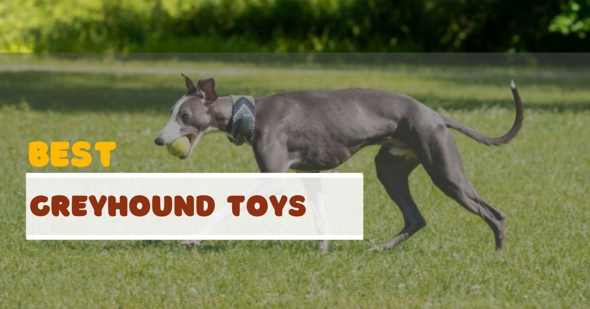 Best Greyhound Toys