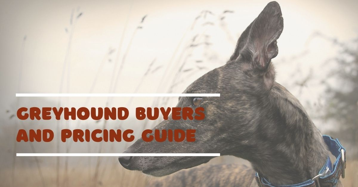 Greyhound Buyers And Pricing Guide